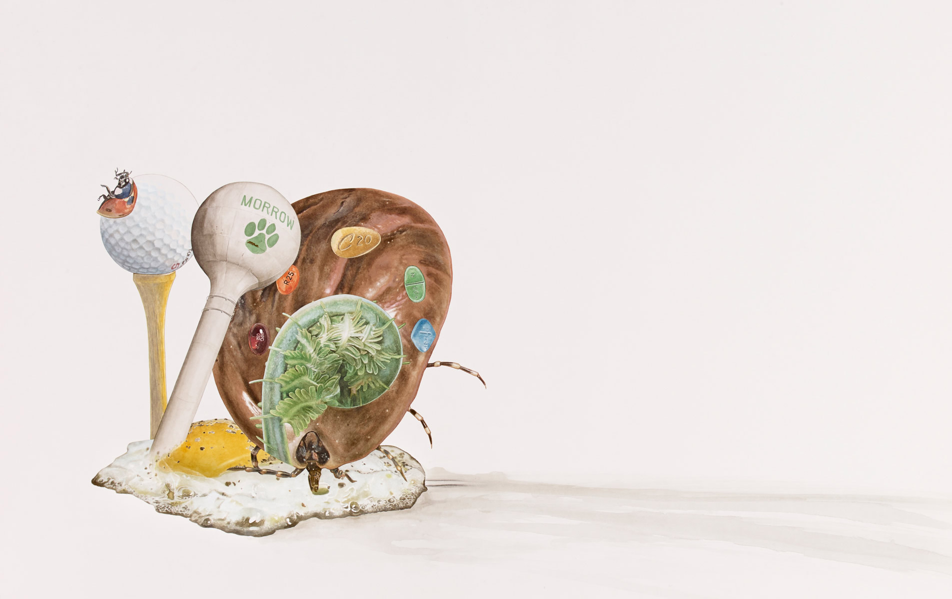 Snail (Gary), 2013, 43 1/4 x 68 1/2 inches, Watercolor on hot press paper