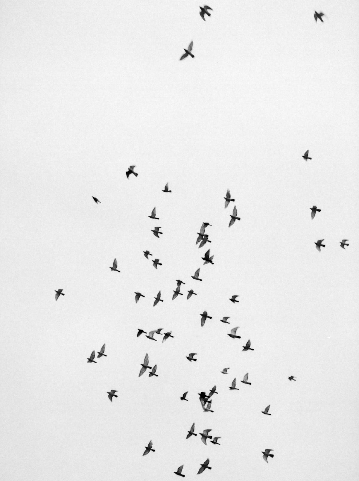 Restos de um Êxodo pelo Fotógrafo Al J Thompson Artes & contextos Ilford HP 400 38
