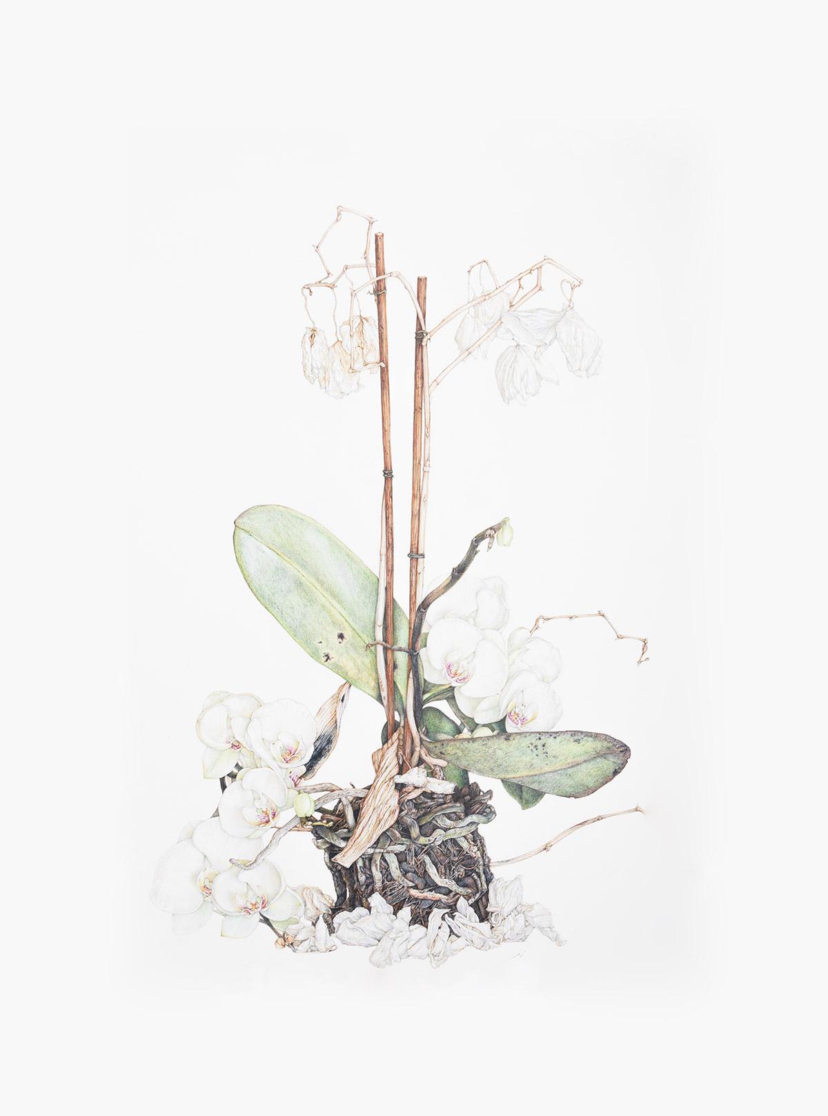 Artista em Destaque: Paul White Artes & contextos White3