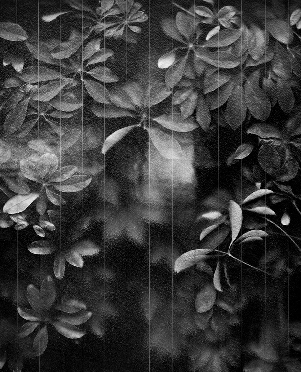 Fotógrafa em Destaque: Tess Ayano Artes & contextos tessayano 003